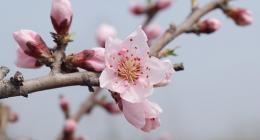 数字能量中,代表桃花运的数字,正桃花的数字和烂桃花的数字分别有哪些?